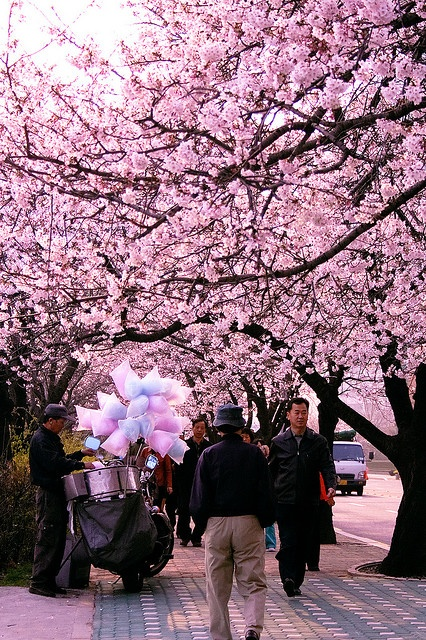 By hellolucy  A man sells cotton candy beneath cherry blossoms in full bloom in Yeouido, Seoul, Korea