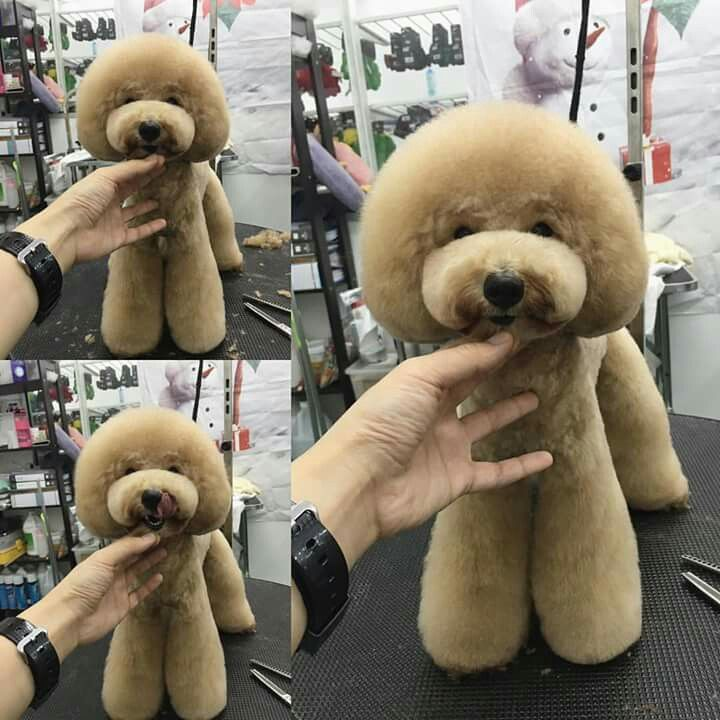 Dog Grooming By Connie C