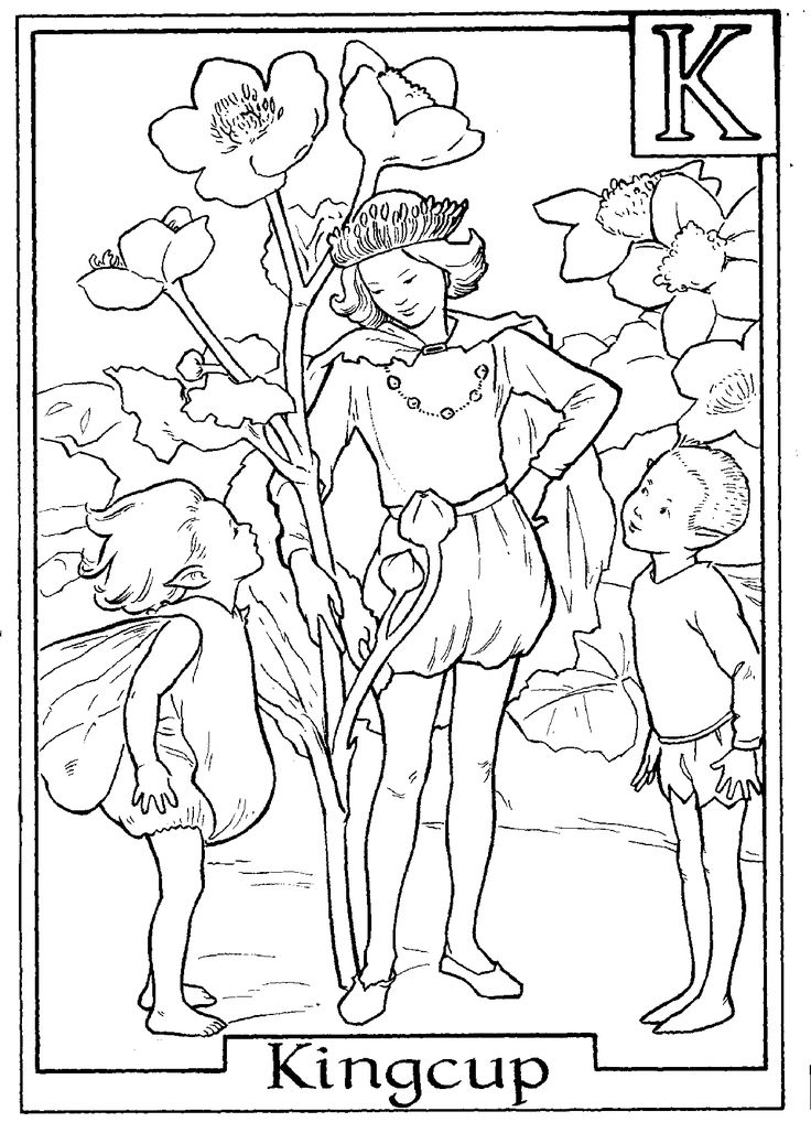 fairy printable colouring page k is for kingcup