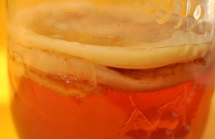 kombucha selber herstellen | Pilz in Großaufnahme, keine Angst, der beißt nicht…