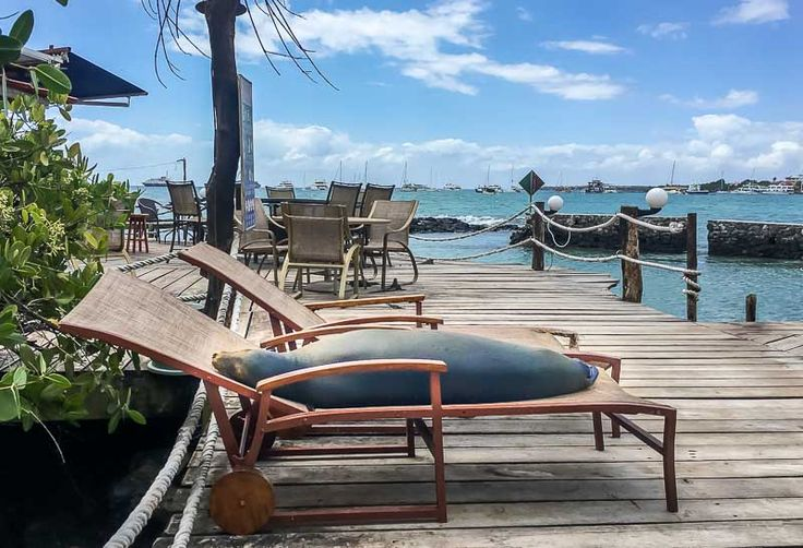 """""""Lounging with Sea Lions at the Red Mangrove Hotel Galapagos – Our Review"""" The Barefoot Nomad"""