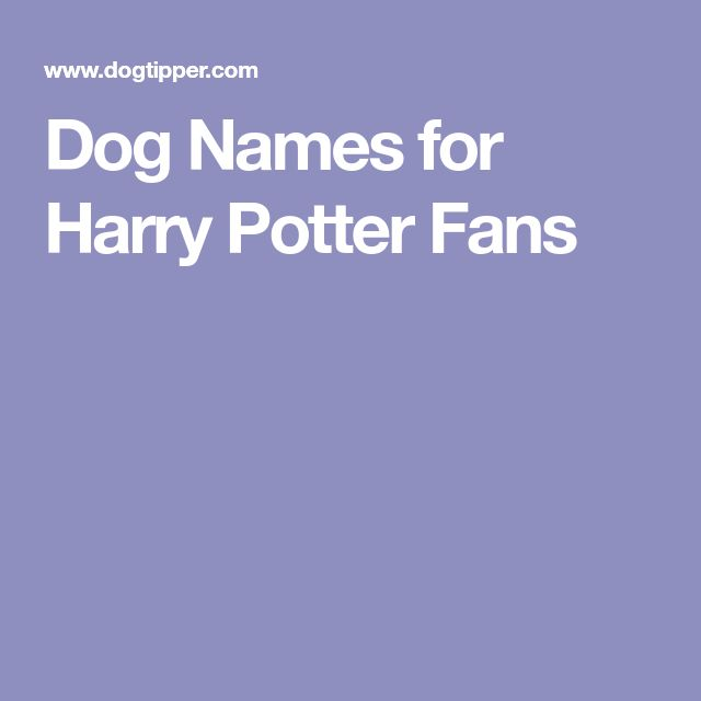 Boggart Dementor Horcrux Sirius Raven/Ravenclaw - if I ever have an all black dog