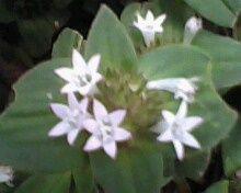 cantiknya bunga liar