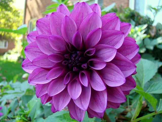 Die 25+ Besten Ideen Zu Lila Nelken Auf Pinterest | Kostengünstige ... Nelken Im Garten Pflanzen Arten Blumen Tipps