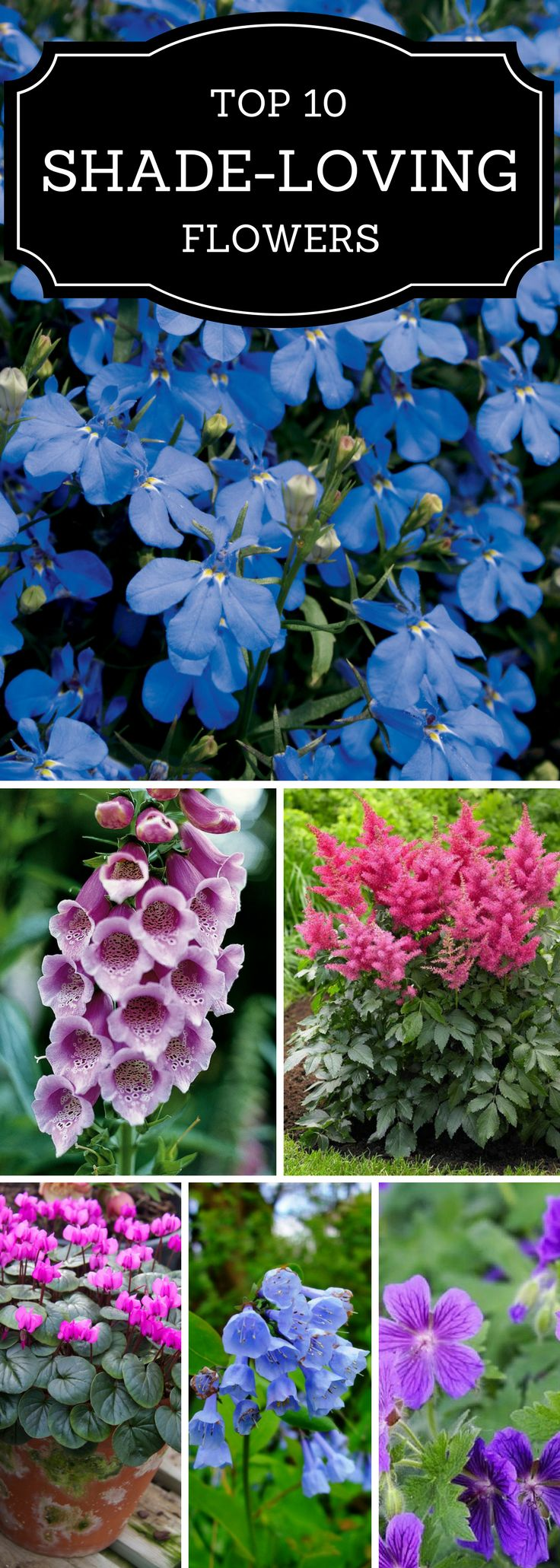 Got a shady yard but want the colorful pops of flowers?  Here's a guide to best flowers for shade!