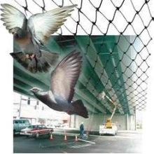BirdNet PE-Plus Bird Netting 50' x 50'Nets 50, Birdnet Peplus, Pe Plus Birds, Birdnet Pe Plus, Peplus Birds, Birds Nets