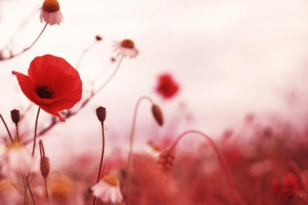 Remembrance Day November 11 What is this day all about?