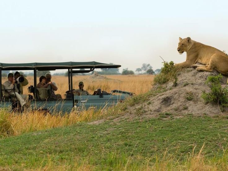 Get up close and personal with Africa's largest predators. Join us at African Outposts on one of our southern African Safaris: http://africanoutposts.co.za/
