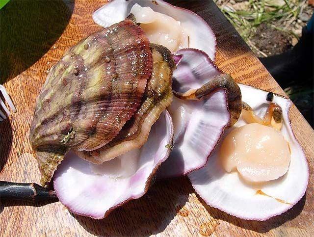 Морское настроение или рецепты блюд из морского гребешка - Мое Настроение - социальная сеть для тех кому хорошо