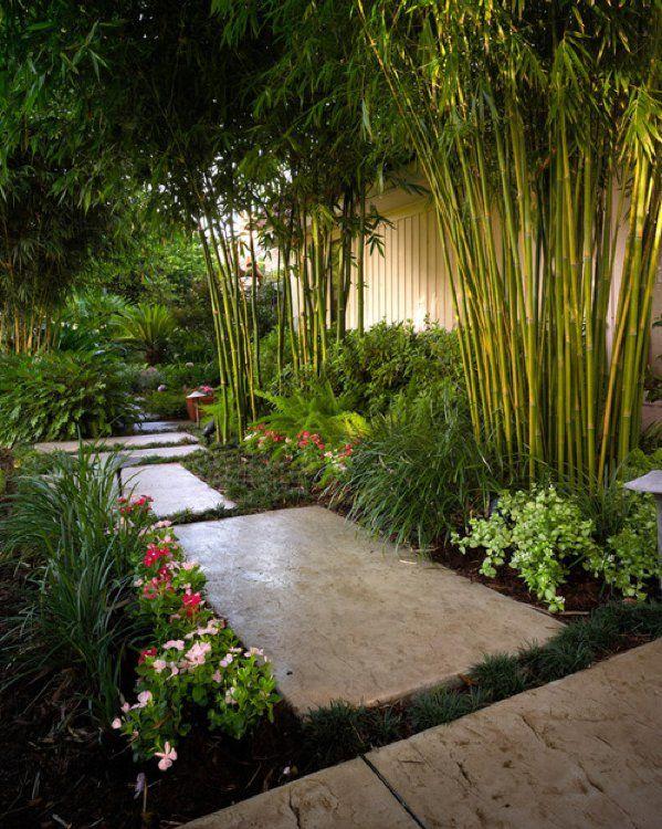Jardin Tropical avec Bambous - Residential Landscape Projects