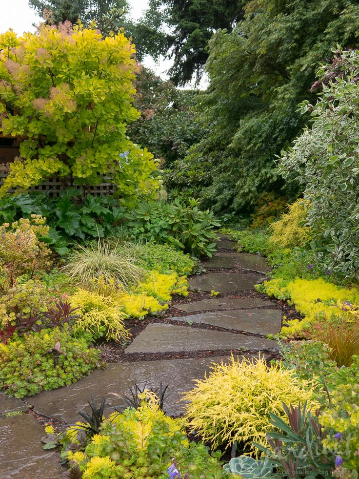 Brighten a shady path http://fine-foliage.com/2014/06/17/going-for-gold/