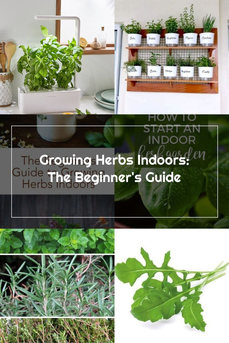 Do you grow herbs indoors in the winter click here for a