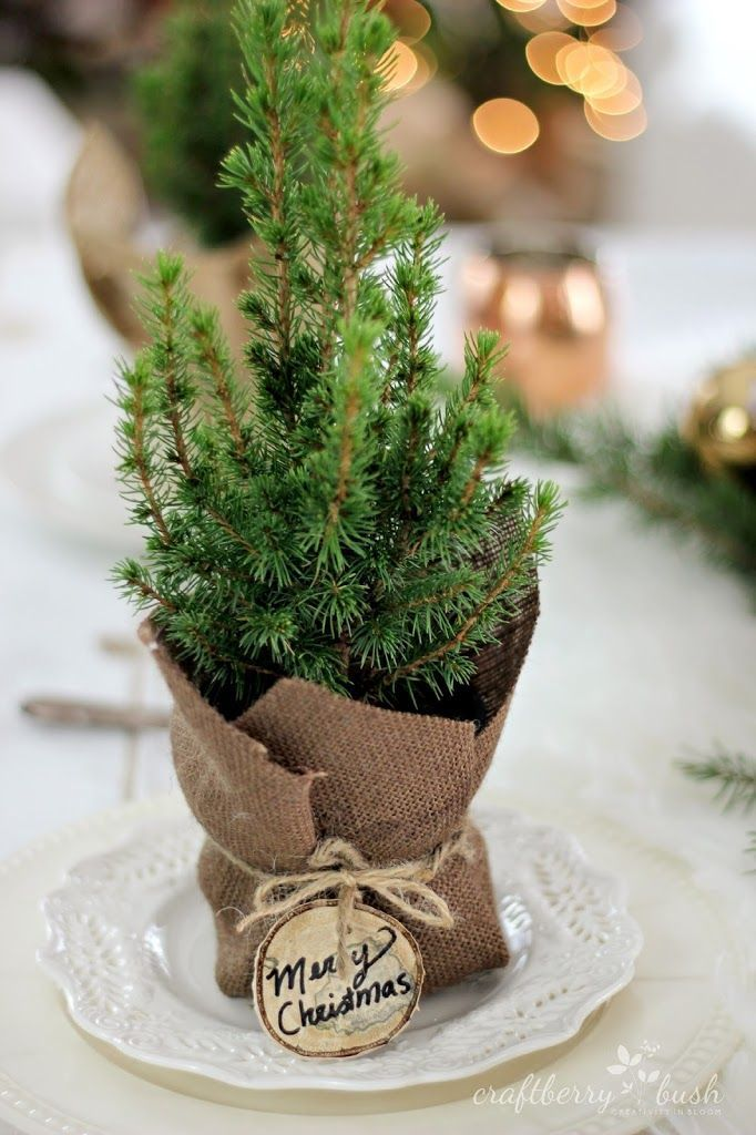 Take some branches from your Christmas tree to make these super easy table decorations!