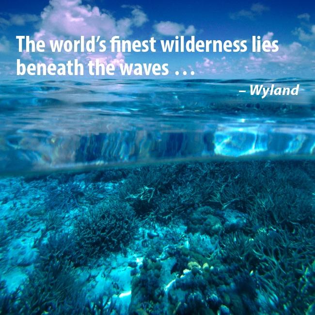 """The world's finest wilderness lies beneath the waves...""  -Wyland"