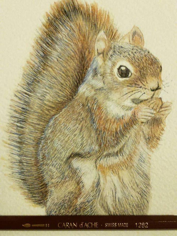 Disegno rappresentante unoScoiattolo Tamia. Realizzato con Tecnica Mista, acquerello e pastello, su carta 20 x 30 cm Artigiano: Simona Breccia #Ductilia