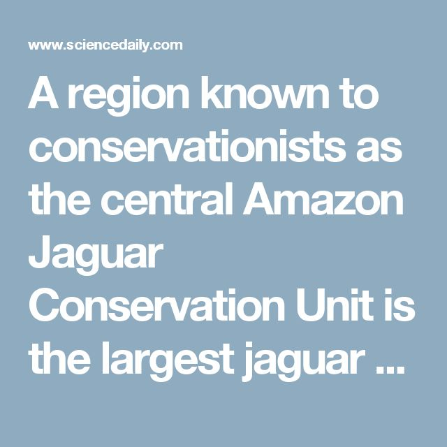 A region known to conservationists as the central Amazon Jaguar Conservation Unit is the largest jaguar stronghold in the world. It encompasses parts of Brazil, Bolivia, Peru, Ecuador, Colombia, Venezuela, Guyana, French Guiana, and Suriname. However, even in this vast area, changes in biological diversity and jaguar populations can come quickly.  Huge extents of formerly unbroken forest, experts say, have already been lost to conversion to monoculture crops, cattle ranching, and…
