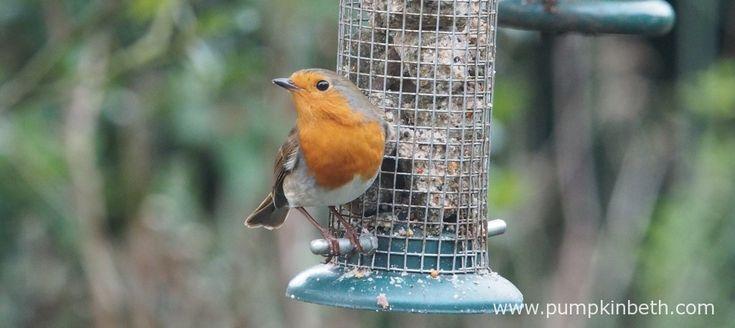 My RSPB Big Garden Birdwatch 2018 - Pumpkin Beth