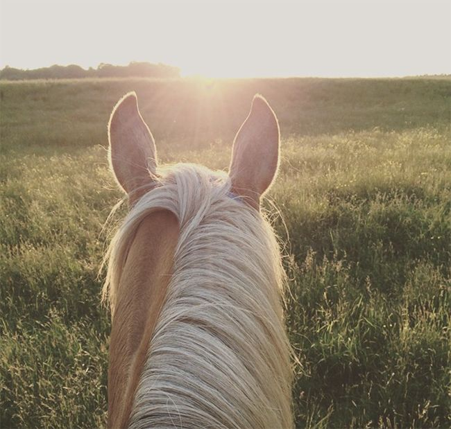 this picture is literally the most gorgeous picture i have ever seen of a sunrise and a horse <3