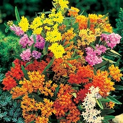 1000 Images About Flowers That Bloom In August On 400 x 300