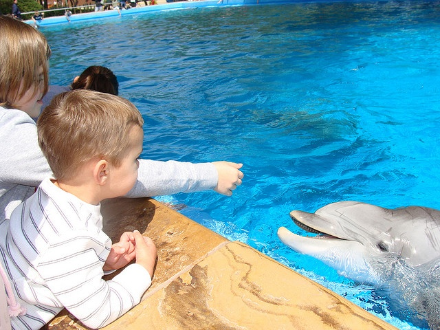 Planning a trip to Sea World? Compare the Three Seasons to decide when to vacation.: Travel Memories, Families Travel, Family Travel, Three Seasons, Vacations Ideas, San Antonio, Seasons Highlights, Families Vacations, Vacations Plans