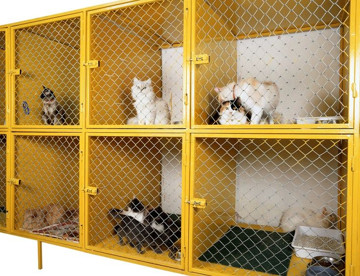 How to Find a Great Cat Boarding Facility.. #CatBoarding  #Cattery
