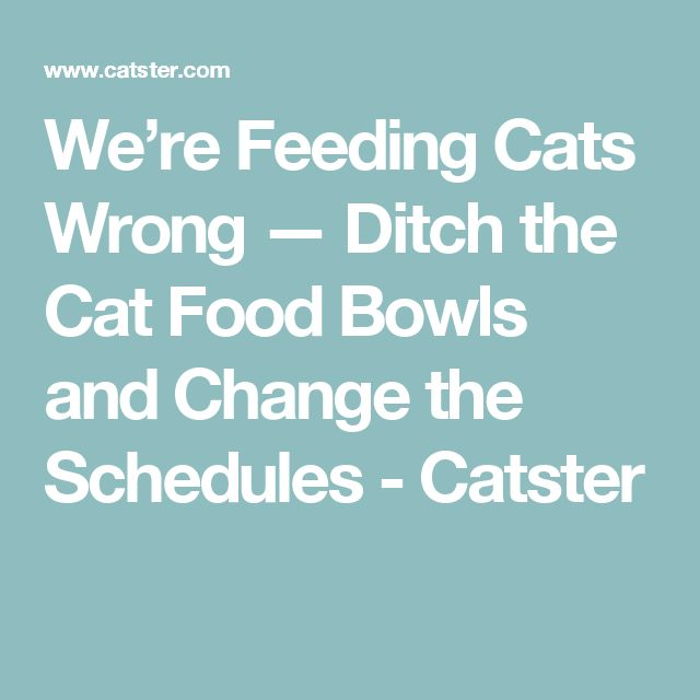 We're Feeding Cats Wrong — Ditch the Cat Food Bowls and Change the Schedules - Catster