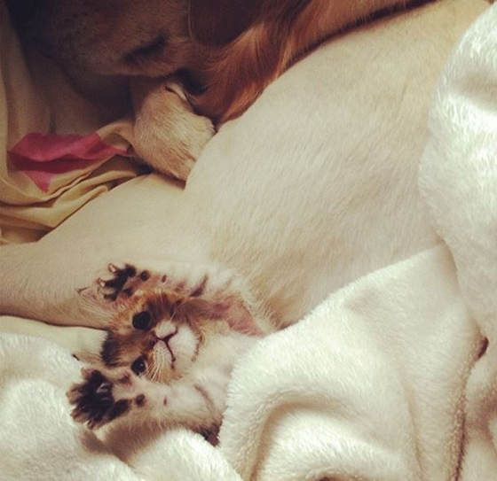 Wasabi-chan rescue kitten recovery