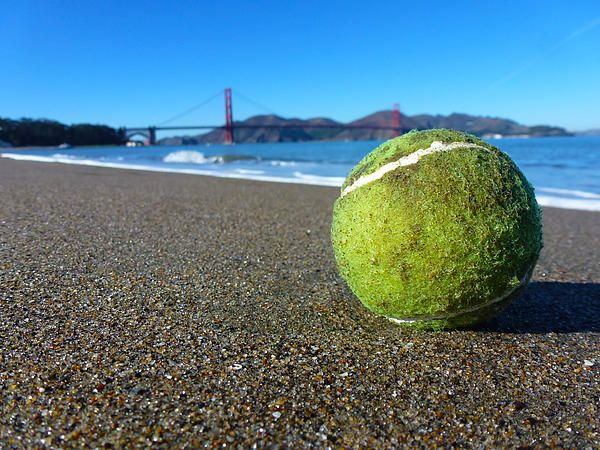 I came across this lonesome tennis ball when walking towards the Golden Gate Bridge one day, There were no marks anywhere near it on the sand so it must have just washed up onto the beach recently. I thought it would make an interesting photo. Want this picture printed on canvas or cards etc? Click on the image :)