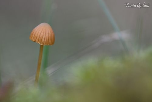 Micro-forest world ...