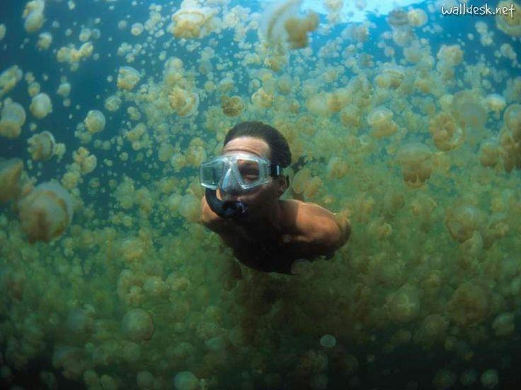 jelly swarm