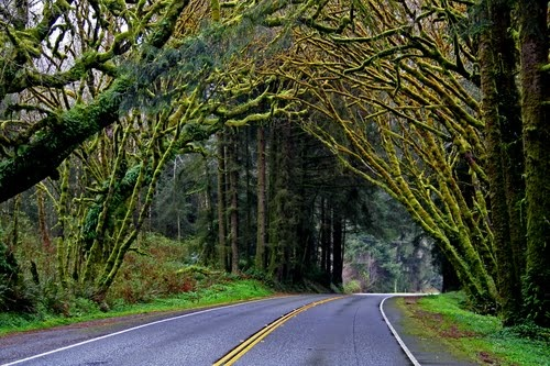 Trees of Mystery, Crescent City, California... Not really worth going to unless you've never seen redwoods or have kids