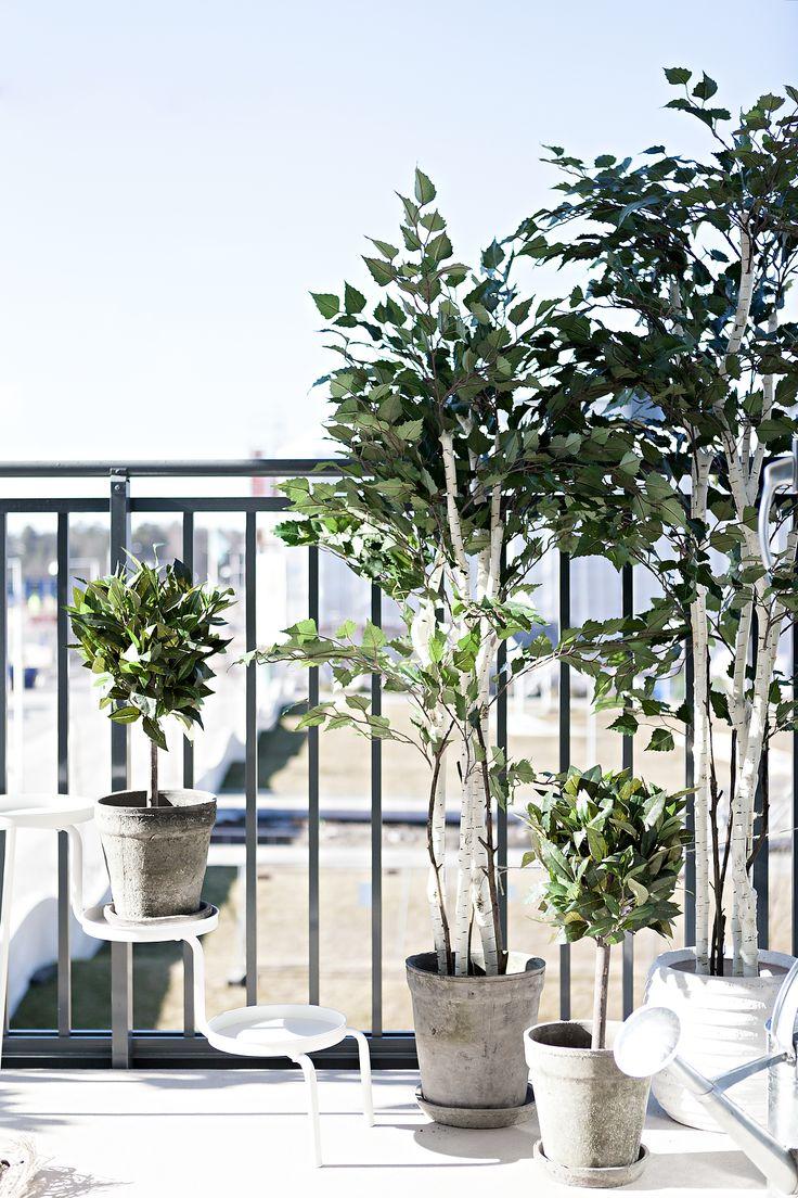 Växter, balkong, björkar, jm, visningslägenhet