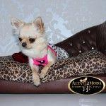 http://altamodaeuropeacanina.com/es/camas-y-sofas-para-perros/1179-sofa-de-lujo-marron-leopardo-para-perros.html