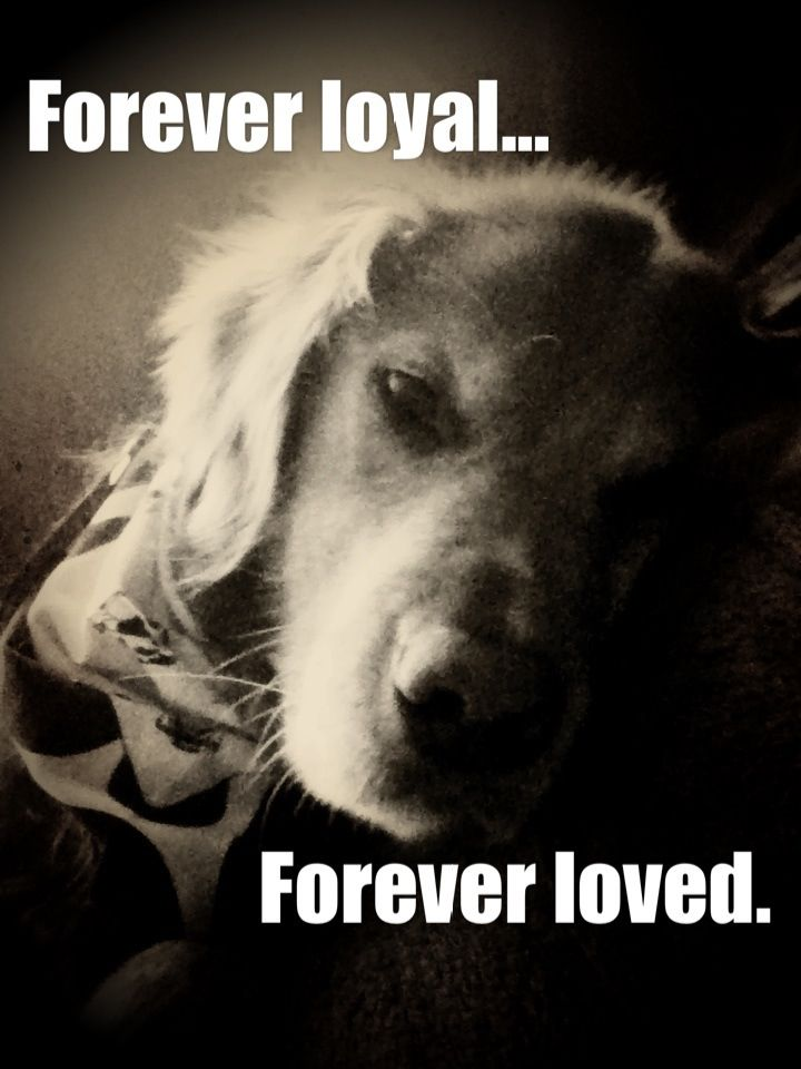 Forever loyal...forever loved.