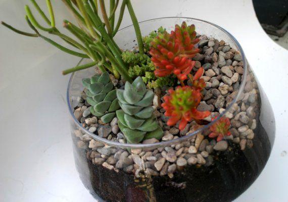 Huge Succulent Terrarium Kit by monkeysalwayslook on Etsy