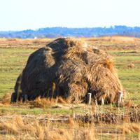 Garden Mulches: Tips: Salt marsh hay is a popular garden mulch in many seaside communities.