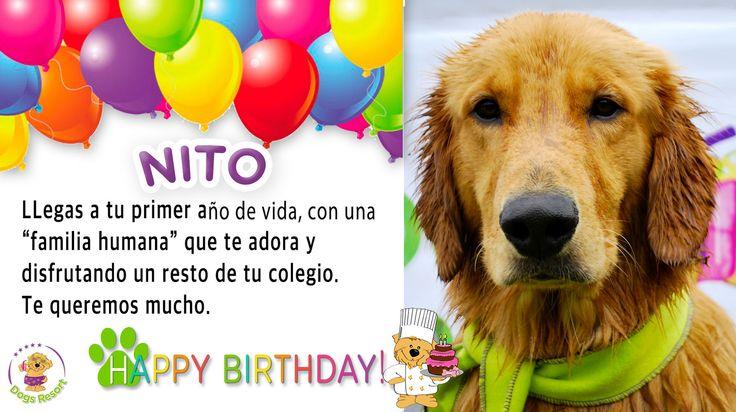https://flic.kr/p/torCwE | Nito, ¡Feliz cumpleaños!