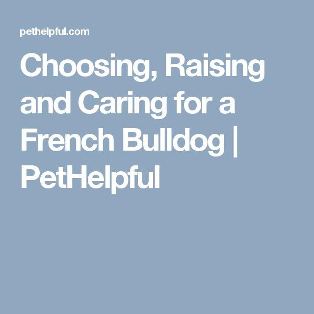 Choosing, Raising and Caring for a French Bulldog | PetHelpful