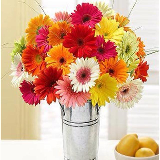 187 besten fleurs Bilder auf Pinterest | Blüten, Schöne blumen und ...