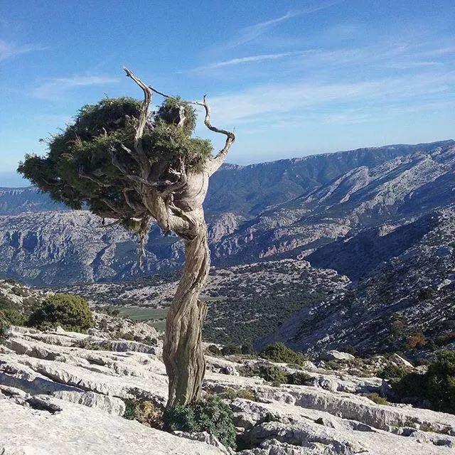 Foto: In Sardegna anche gli alberi assumono sembianze umane; La signora di Monte Corrasi - Oliena. (A.Ganau)