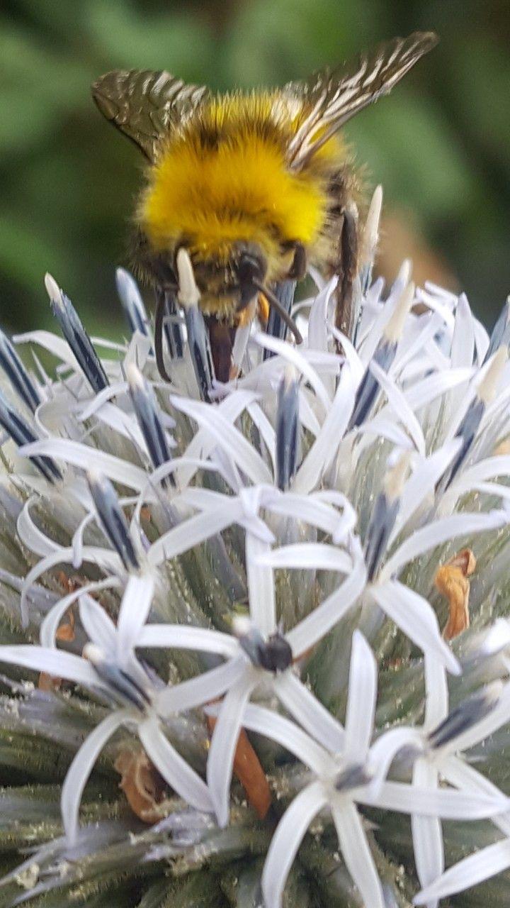 Blume Hintergrund Bild Blüte Natur Nature Amoled für Smartphone