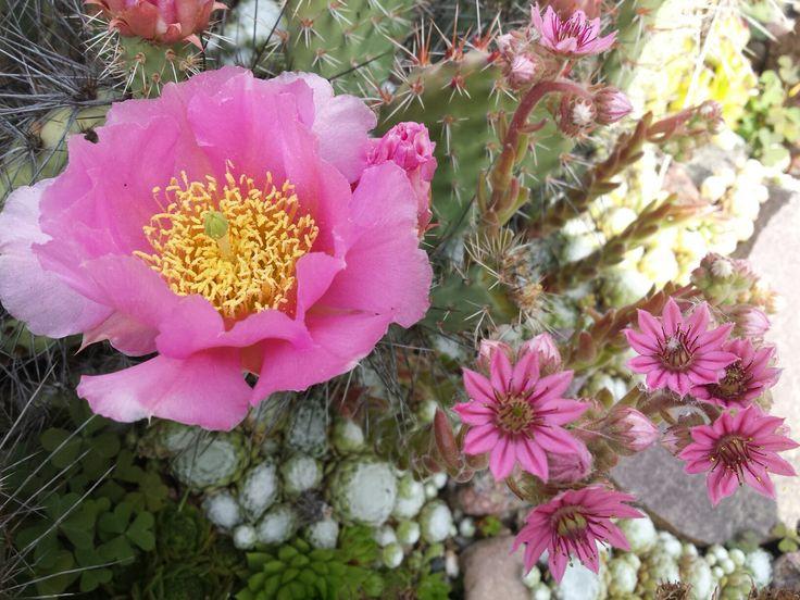 Kwiat kaktusa i rojnika
