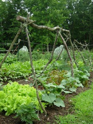 Cool natural/rugged cucumber trellis - how mine usually wind up looking, except with lots of old beat up posts and branches and such