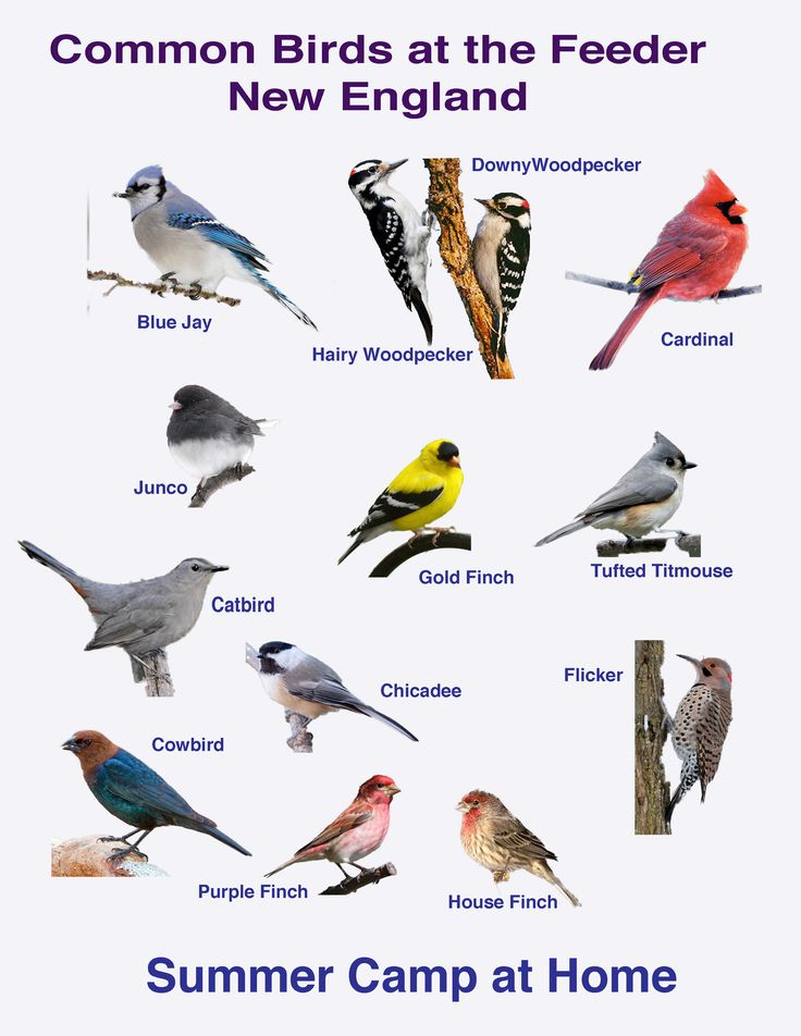 New England Birds Identification | Bird Watching Challenge and Bird Book