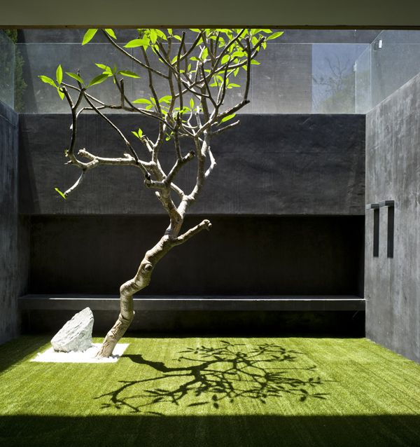 Pitsou Kedem Architects. Minimalist courtyard garden with Plumeria and lawn. Pinned to Garden Design - Courtyards by Darin Bradbury.