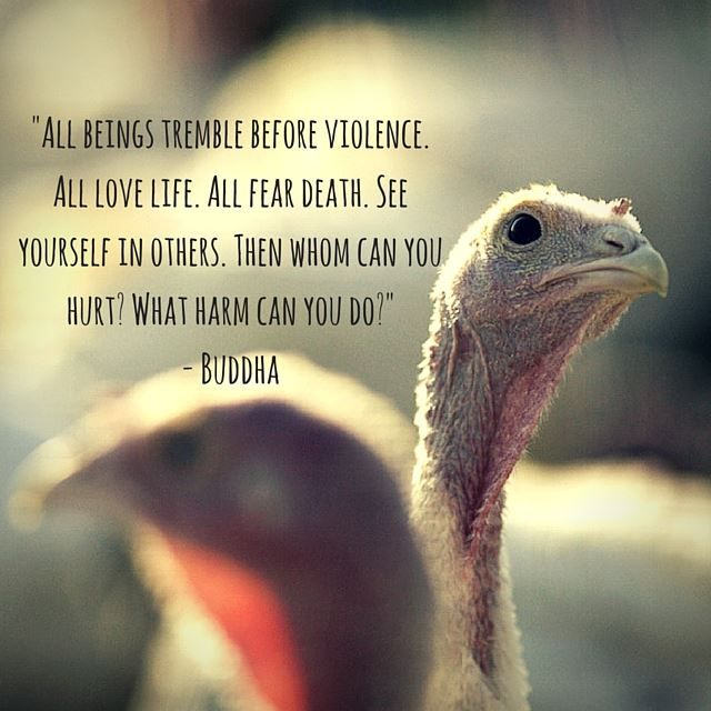 Quotes About Anger And Rage: Best 25+ Animal Rescue Quotes Ideas On Pinterest