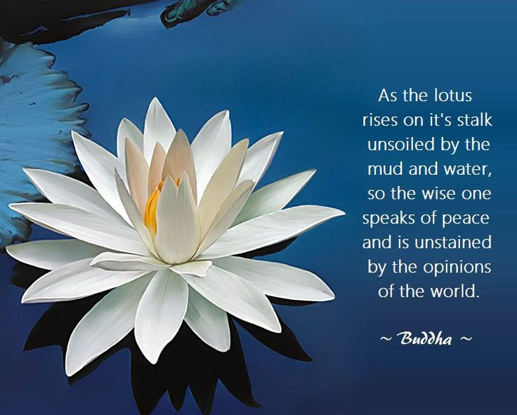 Group Of Lotus Flower Buddha Quote