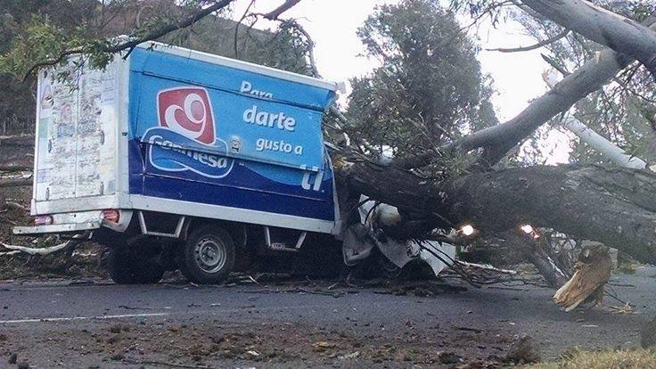 El accidente fue resultado de los fuertes vientos registrados este miércoles en Morelia; el tránsito vehicular se congestionó por más de una hora en la zona – Morelia, Michoacán, 09 ...