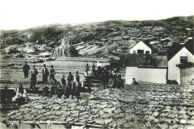 Drying Cod, Newfoundland