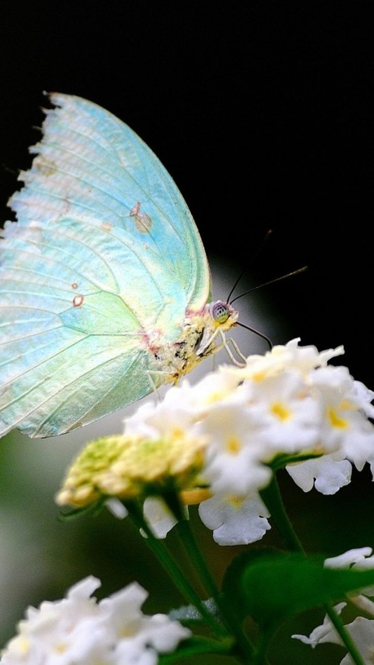 best 25 white butterfly ideas on pinterest beautiful